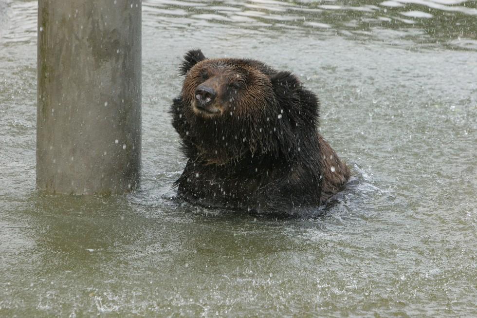 監禁され胆汁取られた熊5