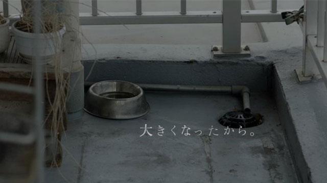 ACジャパンのCMに動物殺処分を考えさせられる「命を飼う覚悟、ありますか。」のアイキャッチ