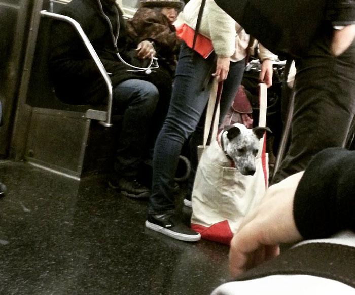 トートバッグに大型犬3