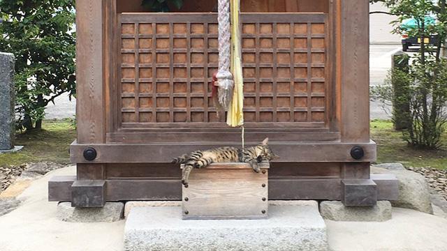 お参りできない神社…賽銭箱の上で堂々と寝るヤツが目撃されるのアイキャッチ