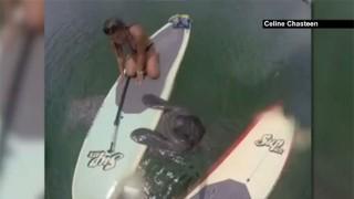 サーフィンとマナティー
