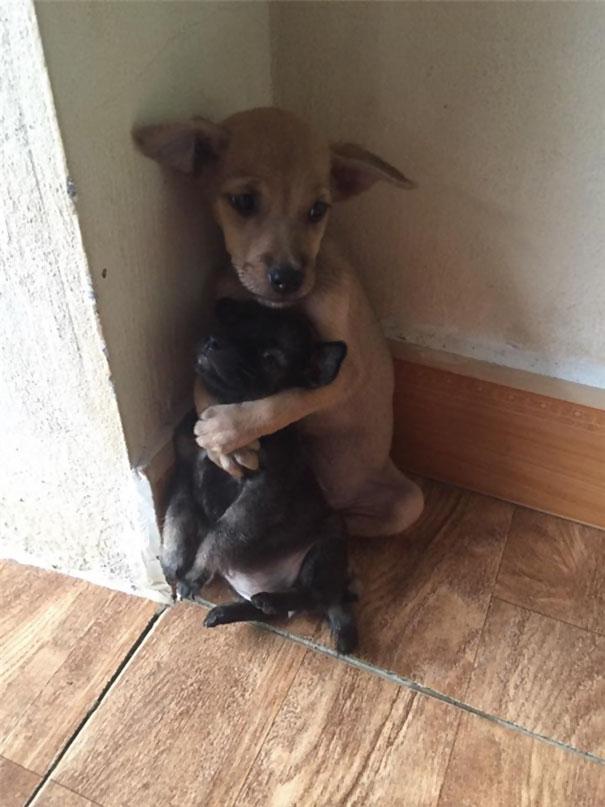 保護された2匹の犬3