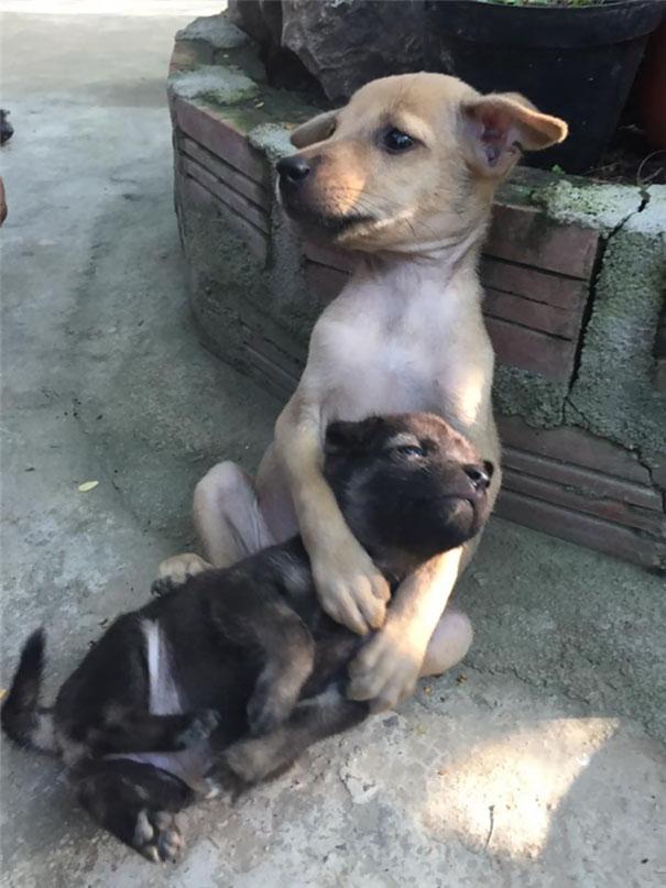 保護された2匹の犬2