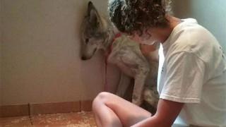 壁にいる犬