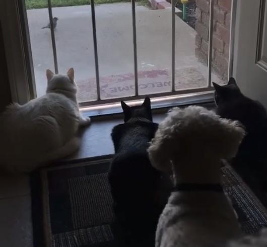 3匹の猫と犬