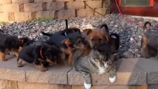ママ猫と子犬