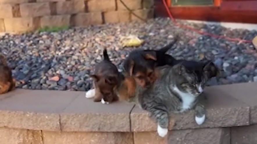 猫の子犬育て1