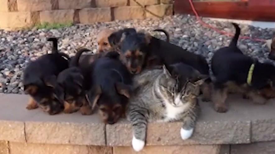 猫の子犬育て2