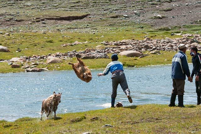 羊を川に投げる1