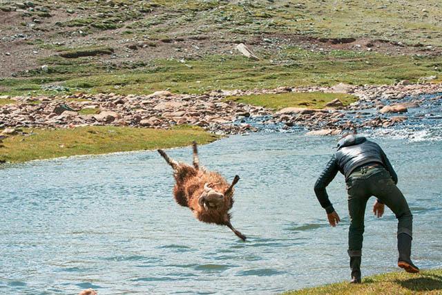 羊を川に投げる2