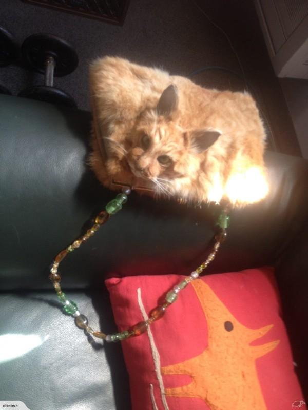 猫の剥製ハンドバッグ2