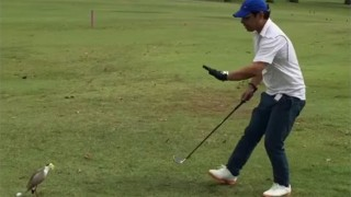 ゴルフと鳥
