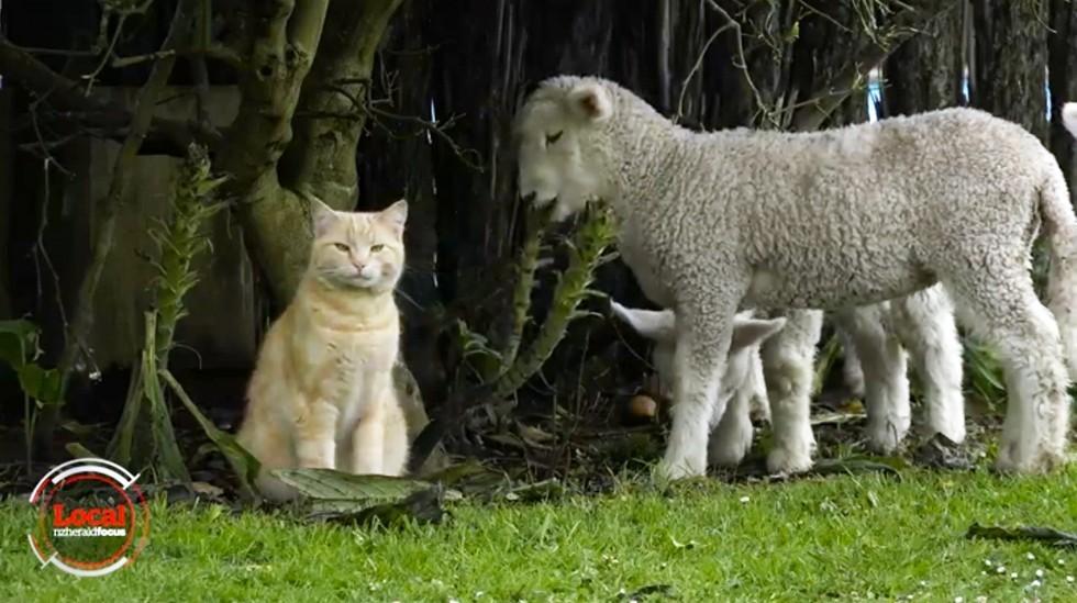 猫と子羊2
