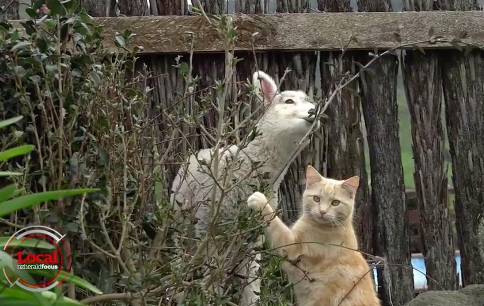 猫と子羊3
