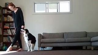 犬とダンス