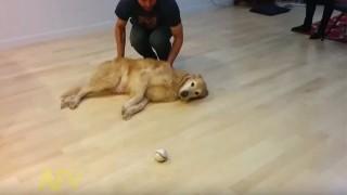 怠け者のボール遊び