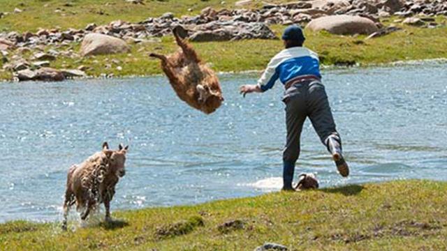 羊を川ポイッ!衝撃的な光景!カザフ人がヒツジを投げる理由が実に効率的だったのアイキャッチ