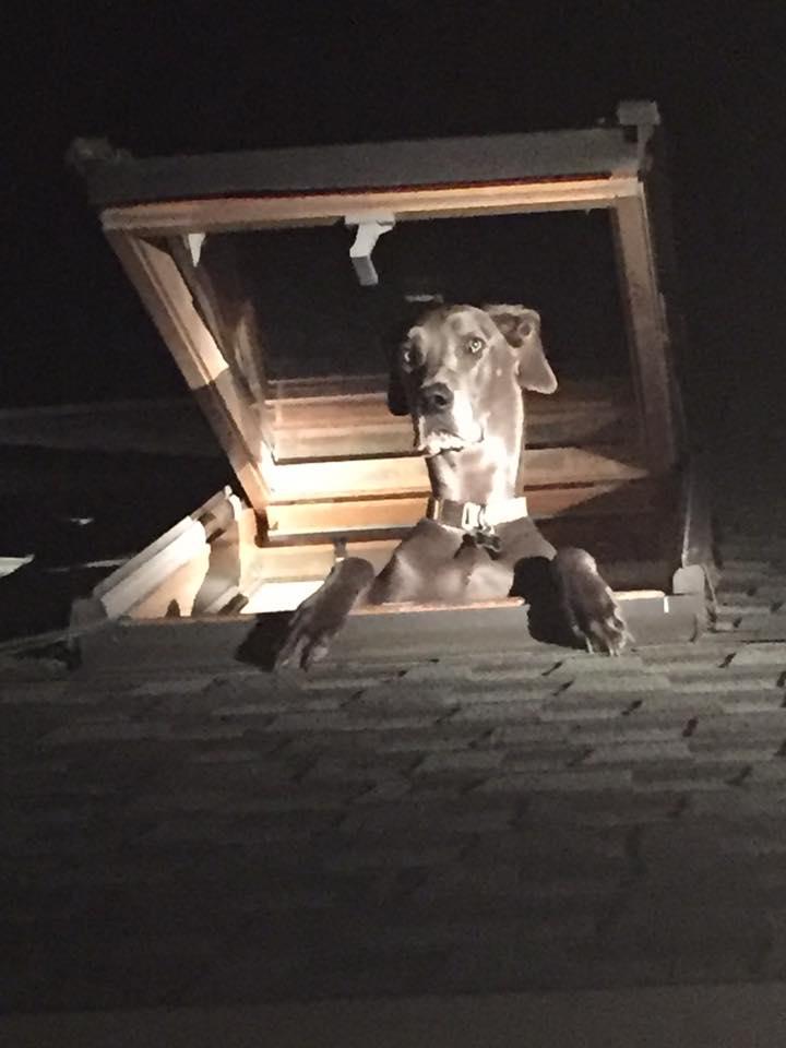 屋根に不審犬2
