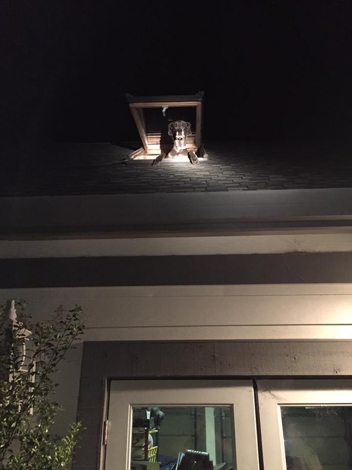 屋根に不審犬1