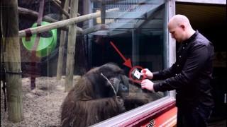 動物園でマジック、オラウータン