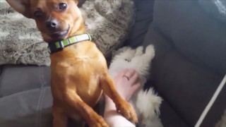 犬が猫を羨む