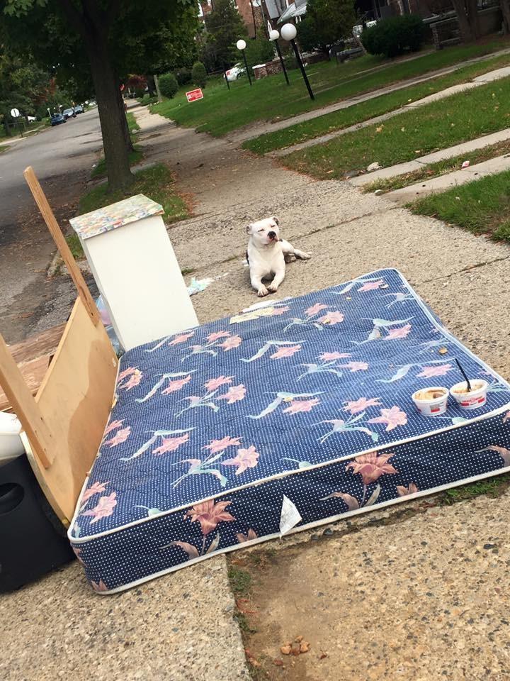 ゴミ捨て場に捨てられた犬2