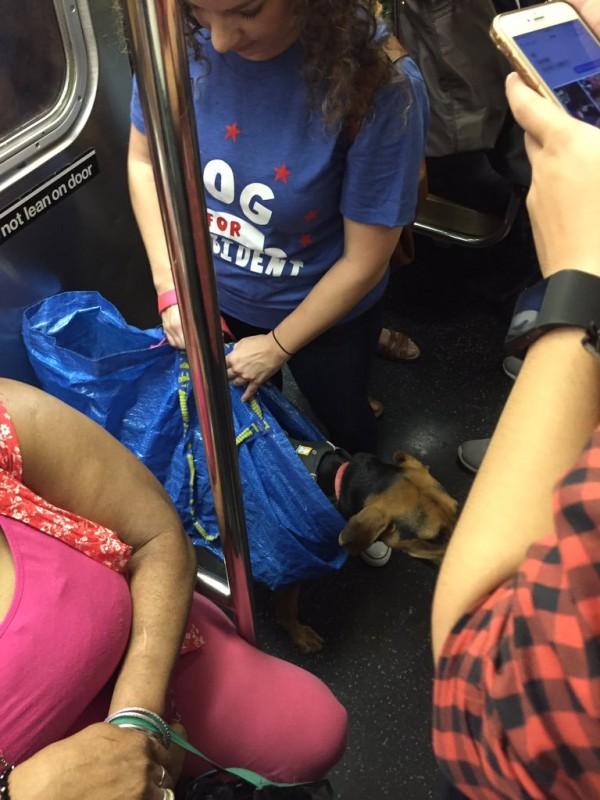 ニューヨークの地下鉄の犬