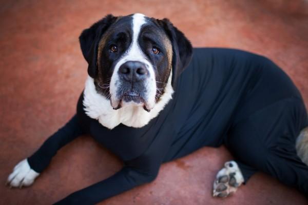 全身タイツのレオタード犬1