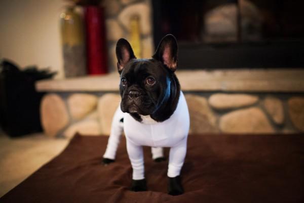 全身タイツのレオタード犬3