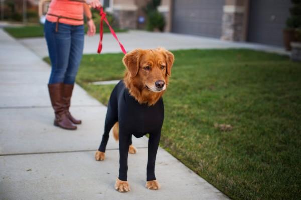 全身タイツのレオタード犬2