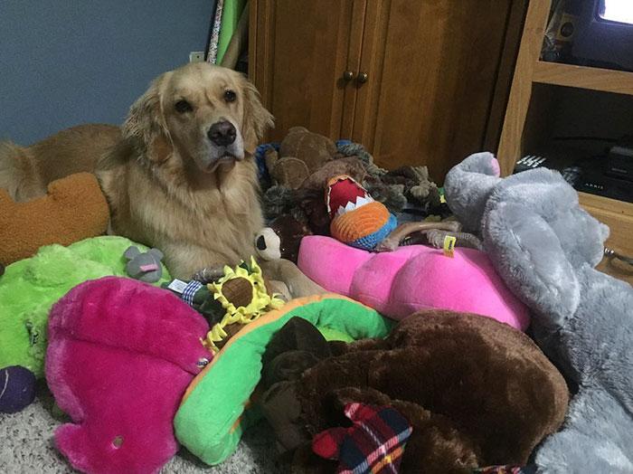 おもちゃを選ぶ犬1
