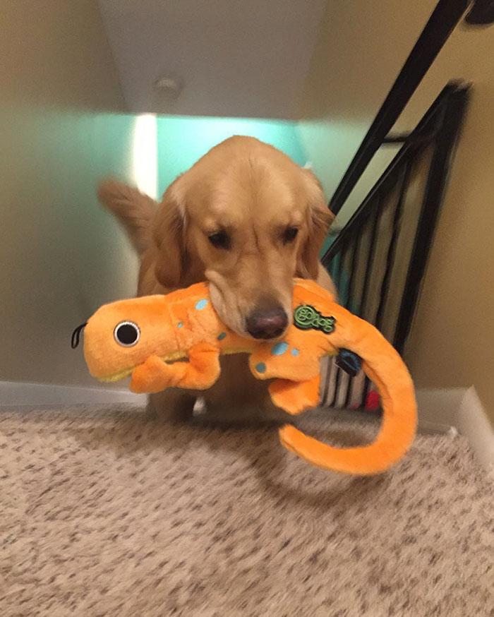 おもちゃを選ぶ犬10