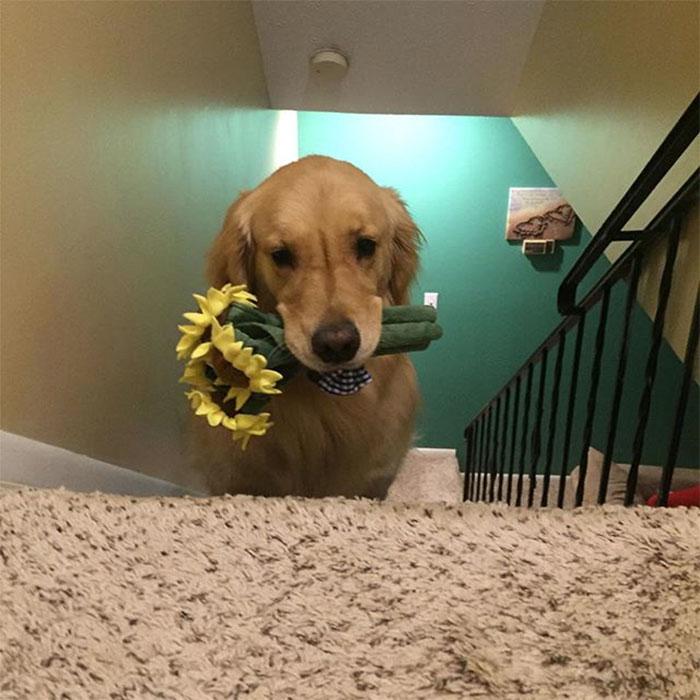 おもちゃを選ぶ犬4