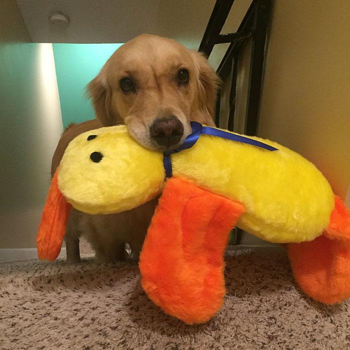 おもちゃを選ぶ犬6