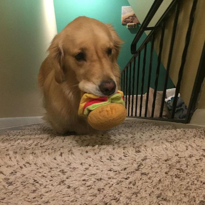 おもちゃを選ぶ犬2