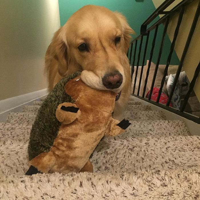 おもちゃを選ぶ犬3