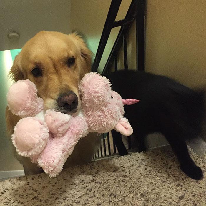 おもちゃを選ぶ犬5