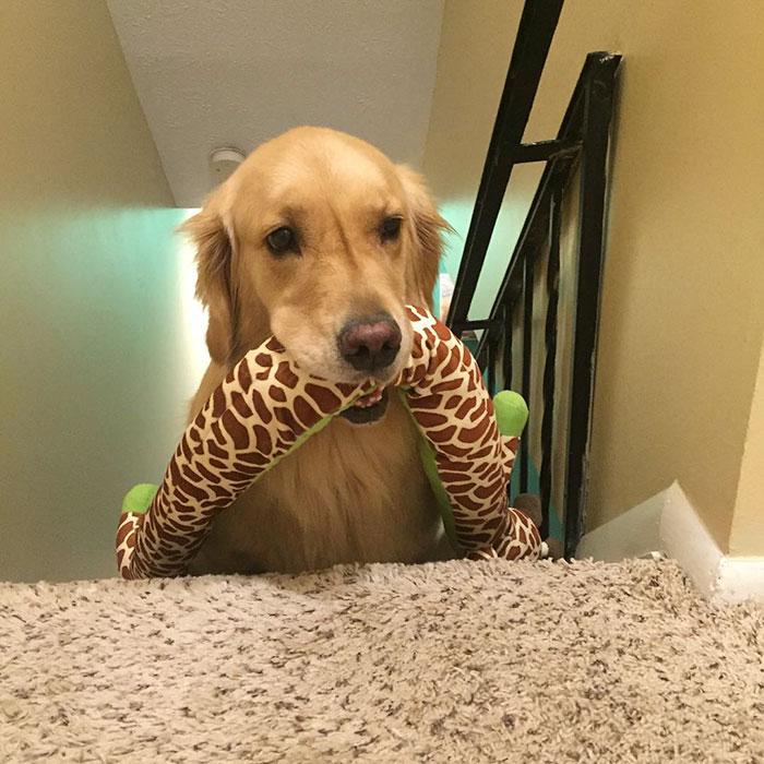 おもちゃを選ぶ犬7
