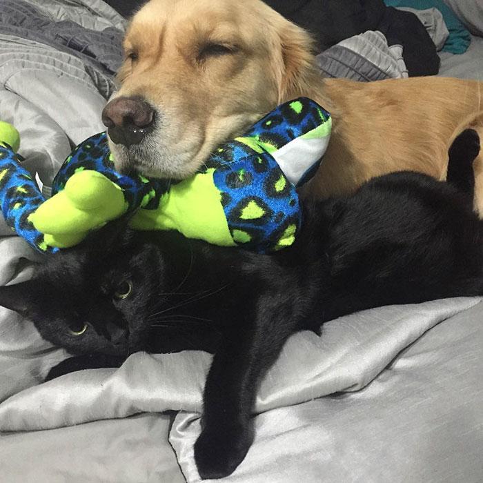 おもちゃを選ぶ犬8