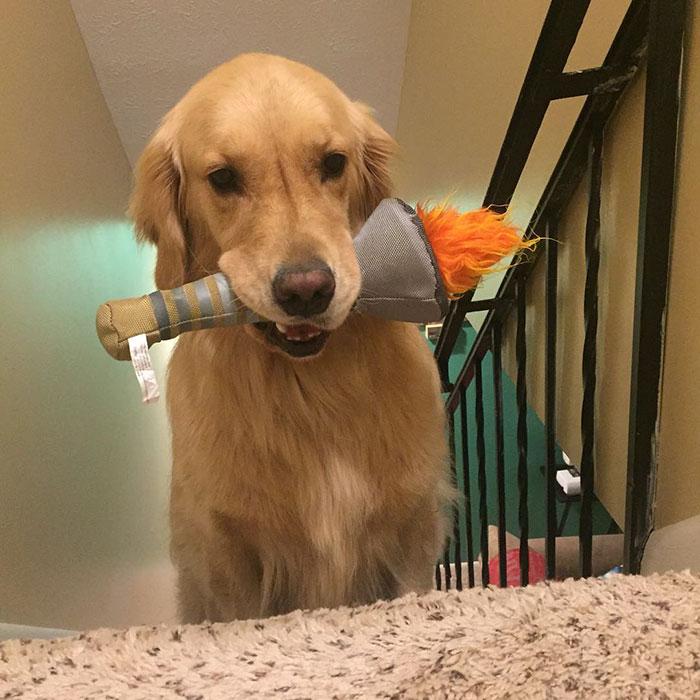 おもちゃを選ぶ犬9