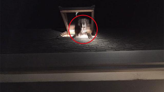 「家の中に不審者が…」現場に急行すると天窓から脱走を図っていた犯人がこちらのアイキャッチ