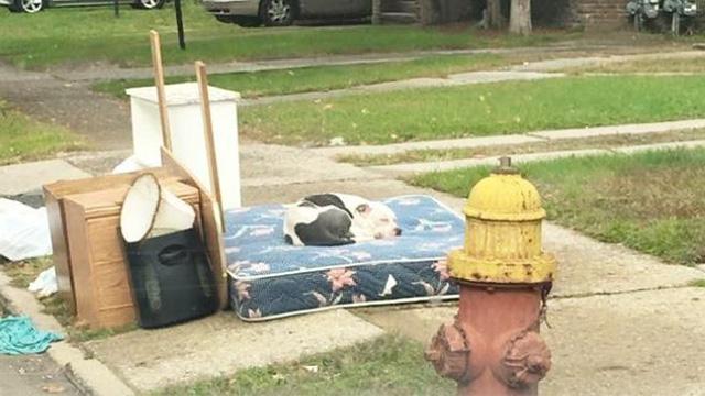 引っ越しで捨てられた犬、思い出のマットレスの上に乗り家族の帰りを待つ。のアイキャッチ