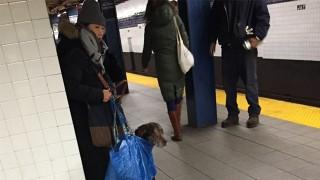 犬とバッグ