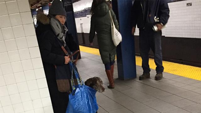 ニューヨークの地下鉄が無法地帯化!犬をIKEAのバックに入れるも…これはアカンのアイキャッチ