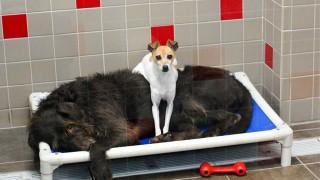 抱きしめ合う犬たち