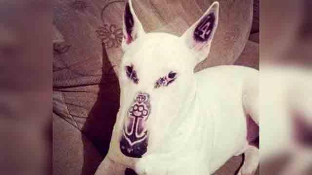 犬にタトゥーを入れました→SNSに画像をアップし炎上のアイキャッチ