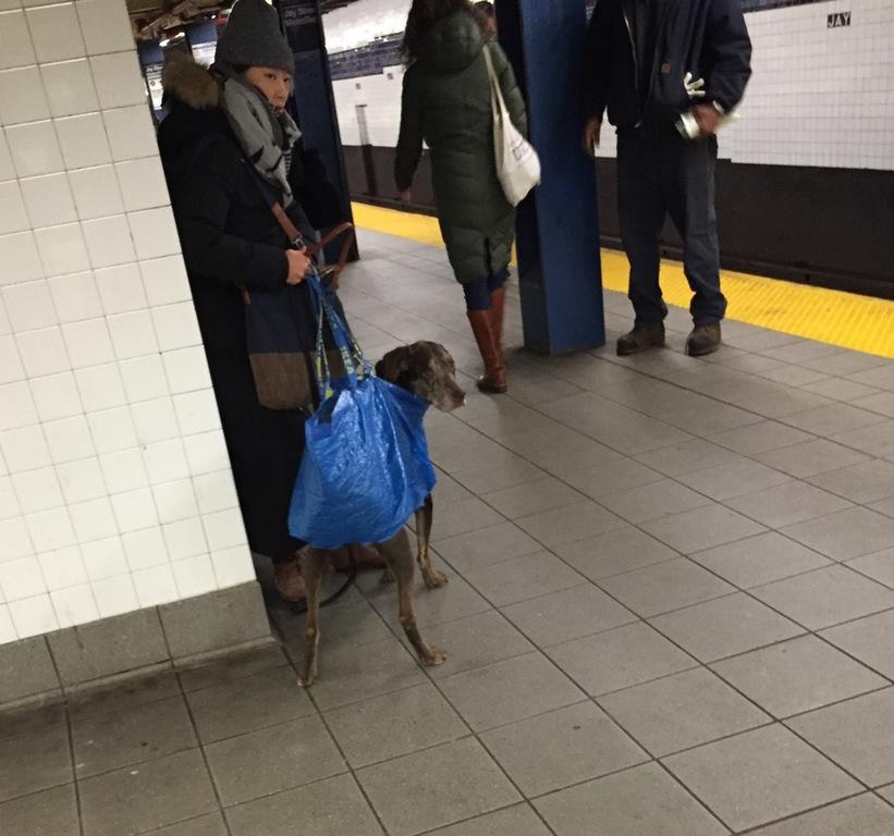 地下鉄に犬