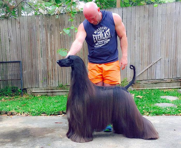 サラサラな毛並みの犬4