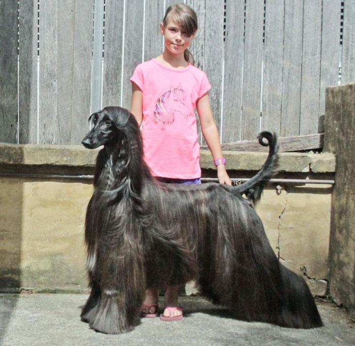 サラサラな毛並みの犬3