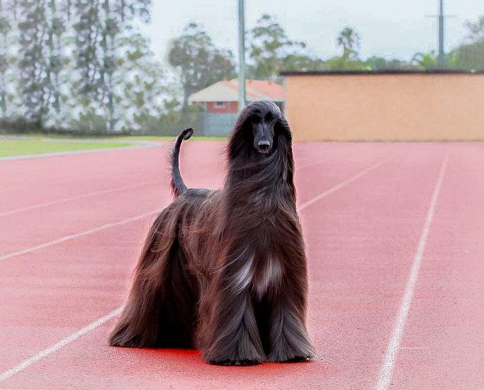 サラサラな毛並みの犬2